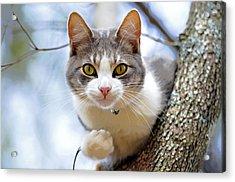 Cat In A Tree Acrylic Print by Susan Leggett