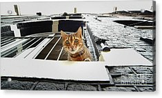 Cat In Amsterdam Acrylic Print