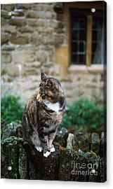 Cat In England Acrylic Print by James L. Amos