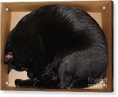 Acrylic Print featuring the photograph Cat In The Box by Kerri Mortenson
