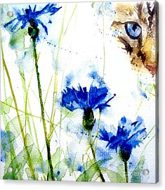 Cat In The Cornflowers Acrylic Print by Paul Lovering