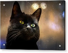Cat In The Window Acrylic Print by Bob Orsillo