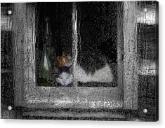 Cat In The Window Acrylic Print by Jack Zulli