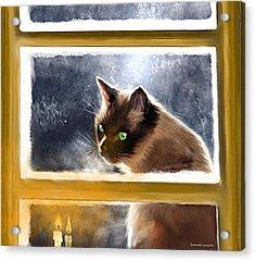 Cat In The Window Acrylic Print