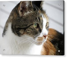 Cat Acrylic Print by Laurel Powell
