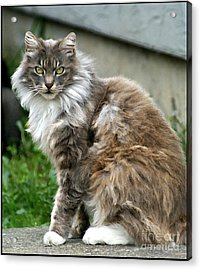 Acrylic Print featuring the photograph Cat by Leslie Hunziker