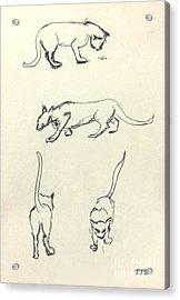 Cat Lines Acrylic Print