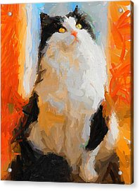 Cat Looking Up Acrylic Print by Yury Malkov