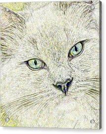 Cat - Mink Ragdoll - Smokey Blu Acrylic Print by Donna E Pickelsimer