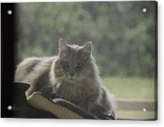 Cat N Saddle Acrylic Print