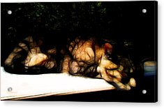Cat Nap 1 Acrylic Print