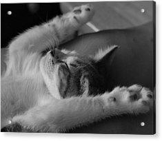 Cat Nap Bw Acrylic Print by Elizabeth Sullivan
