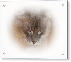 Cat Nap Acrylic Print by Connie Handscomb