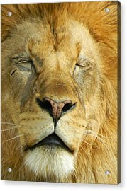 Cat Nap Acrylic Print by Emmy Marie Vickers