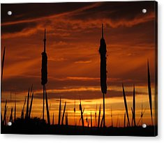 Cat Nine Tails Sunset Acrylic Print
