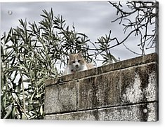 Cat On A Cold Green Wall Acrylic Print
