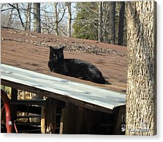 Cat On A Tin Roof Acrylic Print