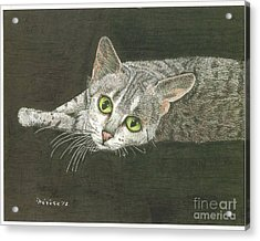 Cat On Black Acrylic Print