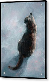 Cat On Concrete Acrylic Print by Diana Moses Botkin