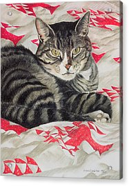 Cat On Quilt  Acrylic Print