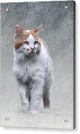 Cat On Texture - 01 Acrylic Print