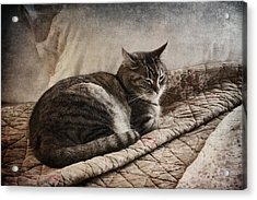 Cat On The Bed Acrylic Print by Carol Leigh