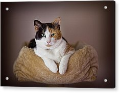 Cat Portrait Acrylic Print
