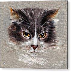 Cat Portrait Yellow Eyes Acrylic Print