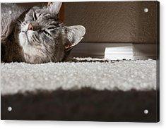 Cat Posing Acrylic Print