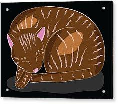 Cat Acrylic Print by Sara Ponte