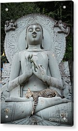 Cat Sleeping On The Lap Buddha Statues. Acrylic Print by Tosporn Preede