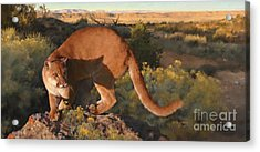 Cat Stretch Acrylic Print