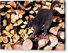 Cat Stretching On Firewood Acrylic Print by Thomas R Fletcher
