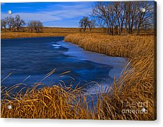 Cat Tails And Ice Acrylic Print
