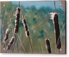 Cat Tails Acrylic Print by Christopher Reid