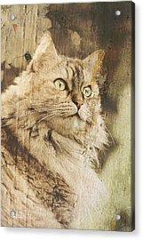 Cat Texture Portrait Acrylic Print