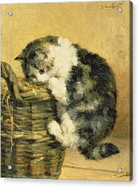 Cat With A Basket Acrylic Print by Charles Van Den Eycken