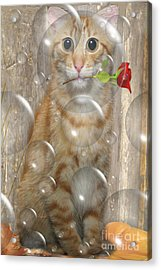Cat With Bubbles Acrylic Print by Jo Collins