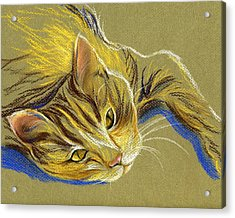 Cat With Gold Eyes Acrylic Print by MM Anderson