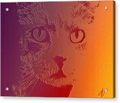 Cat With Intense Stare Abstract  Acrylic Print by Denise Beverly