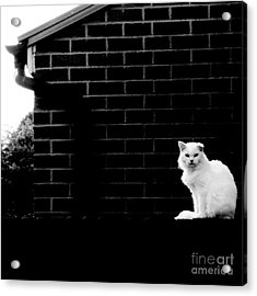 Cat With The Floppy Ear In Black And White Acrylic Print