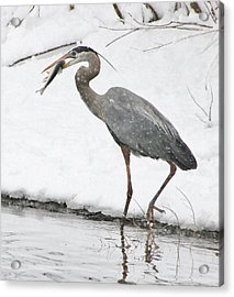 Catch Of The Day 2 Acrylic Print