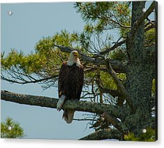 Catch Of The Day Acrylic Print by Brenda Jacobs