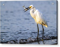 Catch Of The Day Acrylic Print