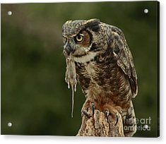 Catch Of The Day - Great Horned Owl  Acrylic Print by Inspired Nature Photography Fine Art Photography