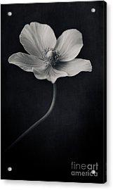 Catch The Light Acrylic Print by Priska Wettstein