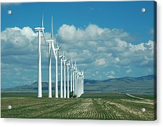 Catch The Wind Acrylic Print by Clay and Gill Ross