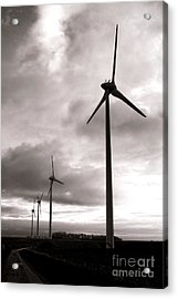 Catch The Wind Acrylic Print by Olivier Le Queinec