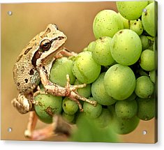 Catching A Ride On The Pinot Acrylic Print by Jean Noren