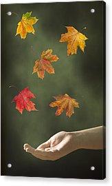 Catching Leaves Acrylic Print by Amanda Elwell